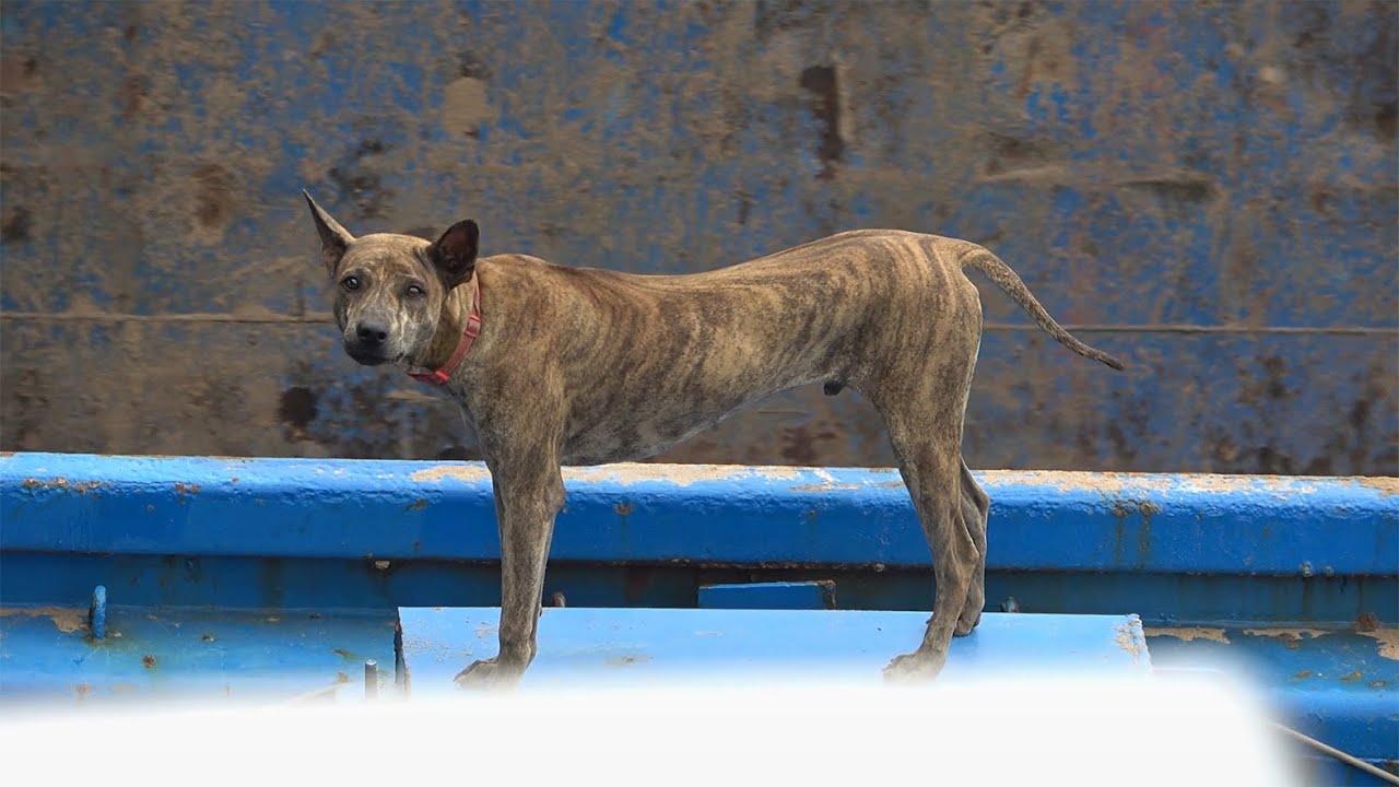 Bạn đồng hành không thể thiếu khi đi sà lan/rare dog