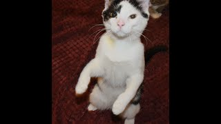 Как делать укол подкожно кошке