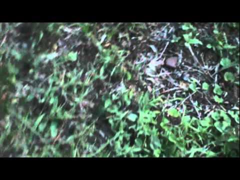 Hummingbird moths 3/3, Usambara Mts, NE Tanzania, 11/24/2011