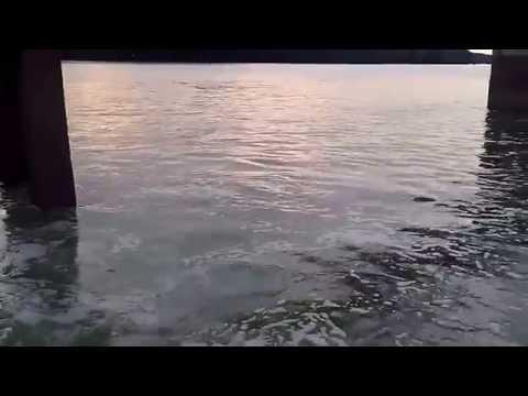 Câu cá đối bằng lưởi câu