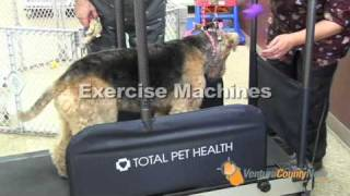 Marys Pet Salon: Camarillo California: Ventura County Now: Grooming Pet Spa