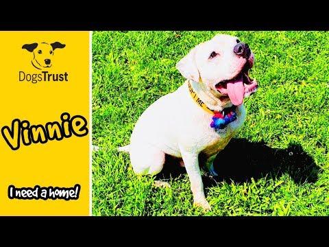 vinnies-dating-profile-|-dogs-trust-west-calder