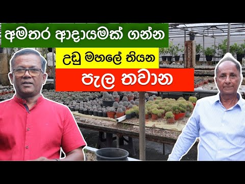 ගෙදර පොඩි ඉඩකින් සල්ලි හොයන්න, ඔබටත් පුළුවන්   Plant Nursery Ideas Ceylon Agri   Episode 215