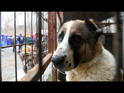 South Korean restaurants refuse to stop selling dog meat during Olympic Games