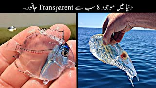 8 Most Transparent And Invisible Animals In The World Urdu | دنیا کے سب سے انوکھے جانور | Haider Tv