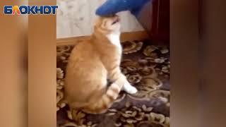 Смешные нападения животных на людей
