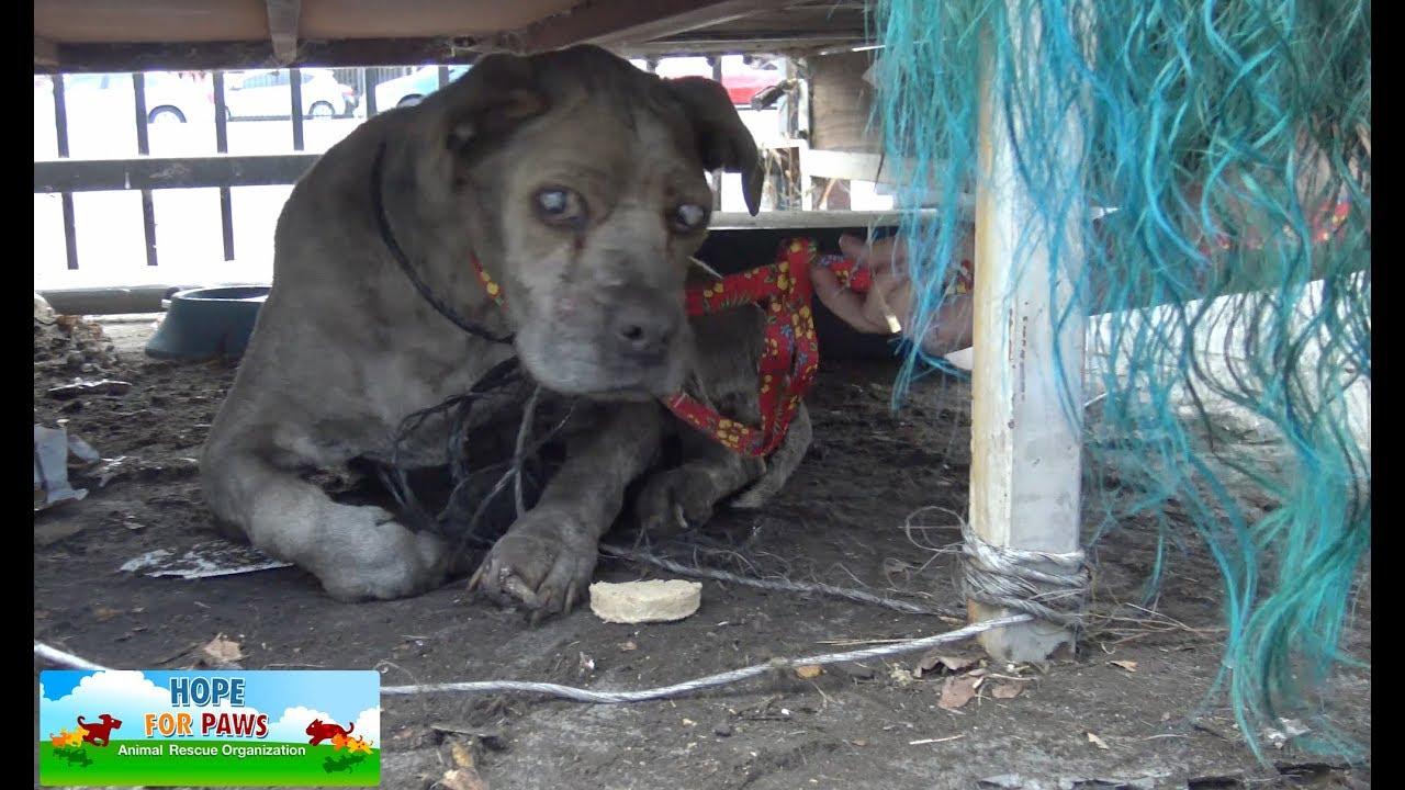 Homeless Dog Rescue Prank
