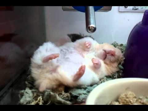 Hamster dreaming of freedom!
