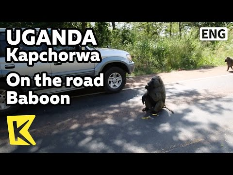 【K】Uganda Travel-Kapchorwa[Uganda 여행-카프초르와]도로위 개코원숭이/Baboon/Road/Banana