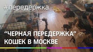 Освенцим для животных. Живодёрка морила котят голодом
