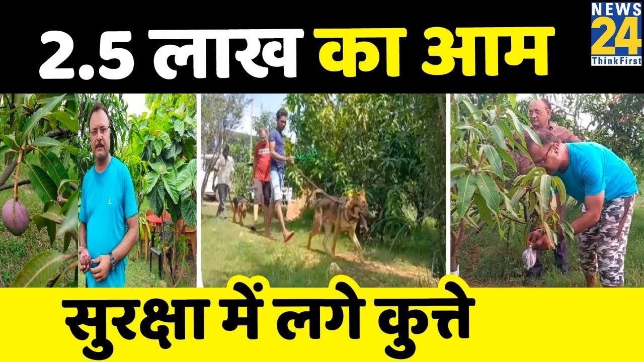 Jabalpur में दुनिया के सबसे महंगे आम की हो रही बागवानी, 2.5 लाख रुपए प्रति किलो बिकता है ये आम