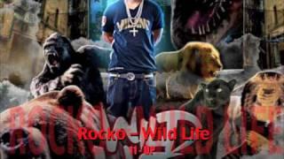 ROCKO   WILD LIFE   11   UP