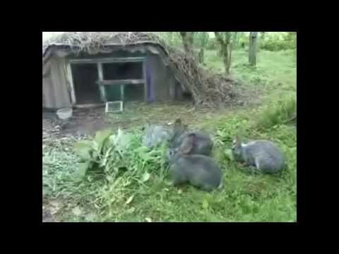 Как выращивать кроликов в яме