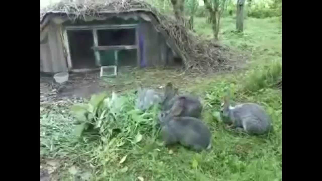 схема разведения кроликов