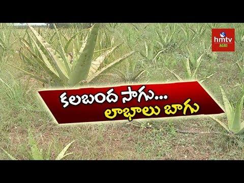 East Godavari Farmer Success Story in Aloe Vera Farming | hmtv Agri
