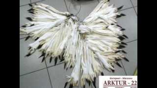 Шкурки горностая выделанные(Сайт: www.arktur-22.ru Компания ARKTUR-22 предлагает Вам купить выделанные шкурки горностая Оптом и в розницу...., 2012-08-23T16:35:55.000Z)