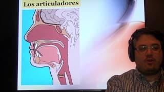 Práctica de pronunciación del español. Fonema, alófono y articuladores.