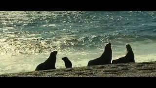 видео 002 Живая природа Океан