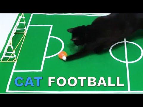 Noah Plays Football (Cat Vs Football)