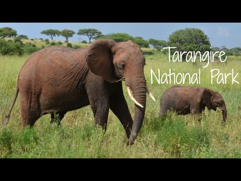 Tarangire National Park | Tanzania Safari Diary Day 2 | Ali Coultas