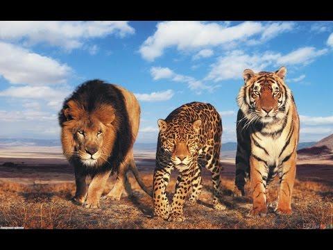СБОРНИК мультфильмов про животных для детей. Львы, тигры, медведи и их друзья.