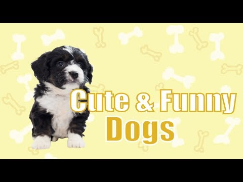 Cute and Funny Dog Vines 🐶 Best Funny Animals Compilation