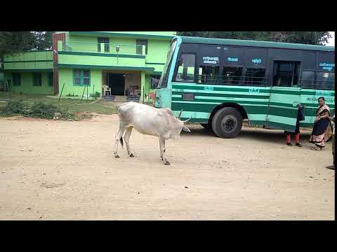 The normal life in Coimbatore India part 4 - GOAT!