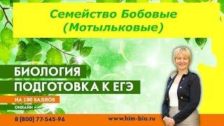 Семейство Бобовые. Теория и практика ЕГЭ /ОГЭ 2017. Биология.