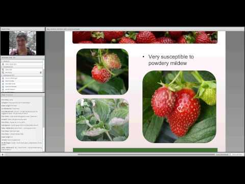 Day Neutral Strawberry Physiology and Varieties