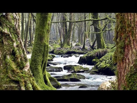 Relaxing Gentle Waterfall - Beautiful Bird, Nature & Sounds of the Forest Relaxation