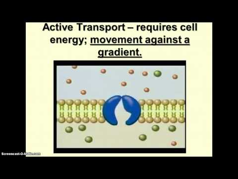The Working Cell - Facilitated Diffusion & Active Transport