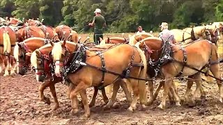 Plowing with Horses at Pinckneyville