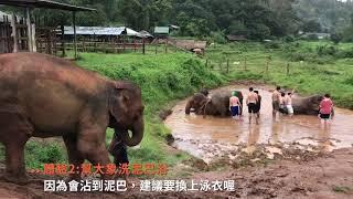 曼谷幫|【不騎大象!來清邁大象友善體驗營幫大象洗澡 ...