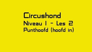 Circushond - Les 2 -  Punthoofd hoofd in
