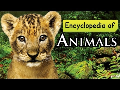 Encyclopedia of Animals for Children || Learn About Animals for Kids