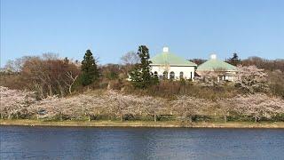 日本一周女ひとり旅271日目。宮城県平筒沼から春の陽気Live