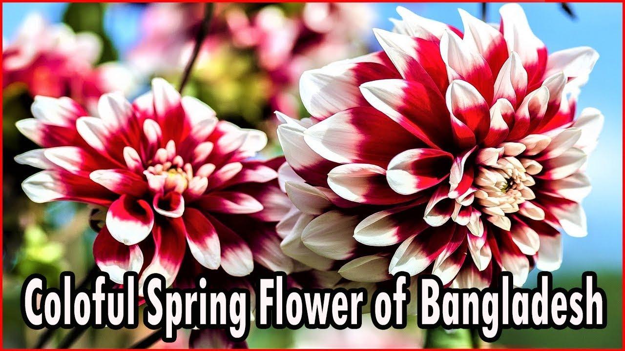Colorful Spring Flowers In Bangladesh Bosonter Full Gada Mug
