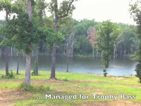 Alabama Land For Sale – Windmill Ridge – 625 Acres – Perry County