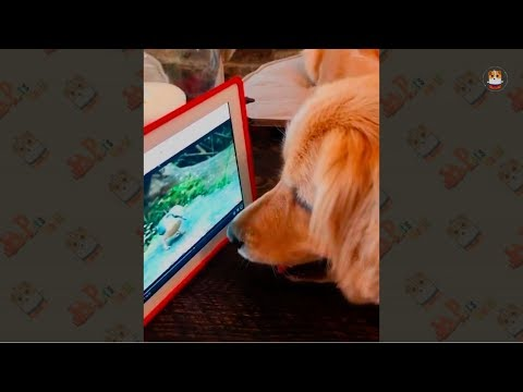 The Dog with Television Compilation