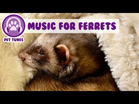 Relaxing Music for Your Ferret