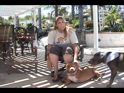 PIT BULL RESCUE: It's The Pits