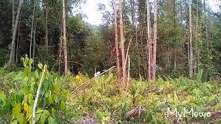 mikat kolibri ninja part 5