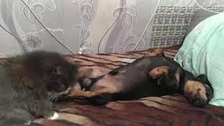 Самый крутой видео недели Спа массаж животных