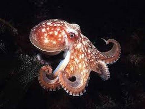 Octopus Palma Aquarium Mallorca 4K