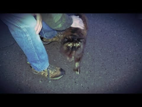 Throwback Thursday, remembering cute cat with no tail that we met on a walk one night (mMc 0827)