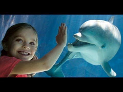 Dolphin Cove at SeaWorld Orlando