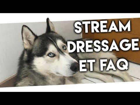 (REDDIF LIVE) COMMENT J'AI DRESSÉ MON HUSKY + FAQ