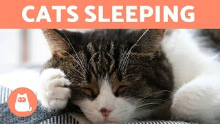 CATS SLEEPING 🐱💤 Facts About Cat Sleep Compilation