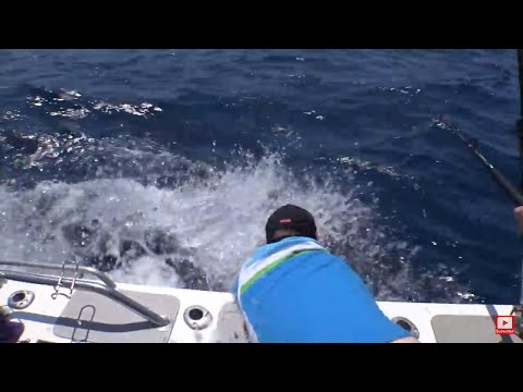 He Grabs The Marlin By The Bill And Immediately Regretted It.