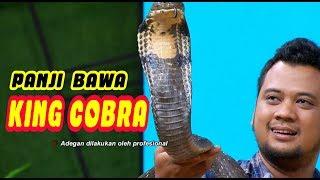 Panji Petualang Bawa KING COBRA | OKAY BOS (11/03/20) Part 2